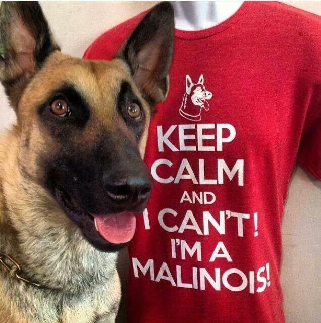 I need this shirt in my wardrobe immediately! Belgian