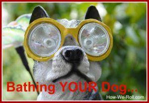 Rainwater Harvesting How We Roll Good Doggies Online Dive Mask Animal Theme