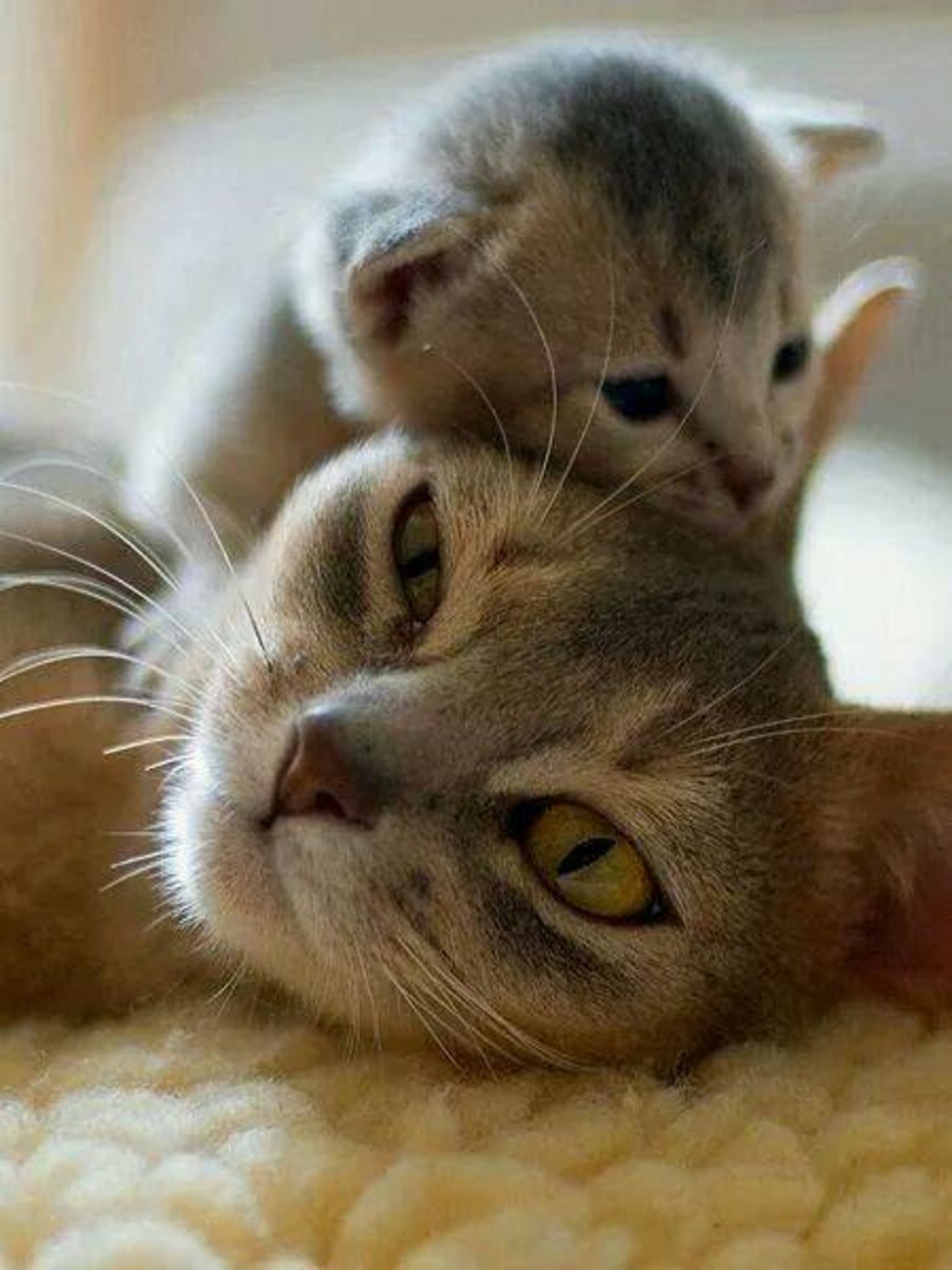 Cute mom and baby cat