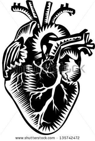 Heart Anatomy Organ Human Body Png Anatomy Art Biology Cartoon Clip Art Anatomy Organs Heart Anatomy Anatomy Art