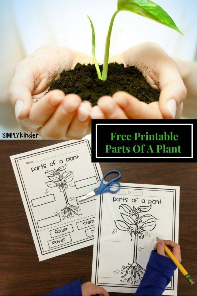 Parts of a Plant Free Printable | Parts of a plant, Simply ...