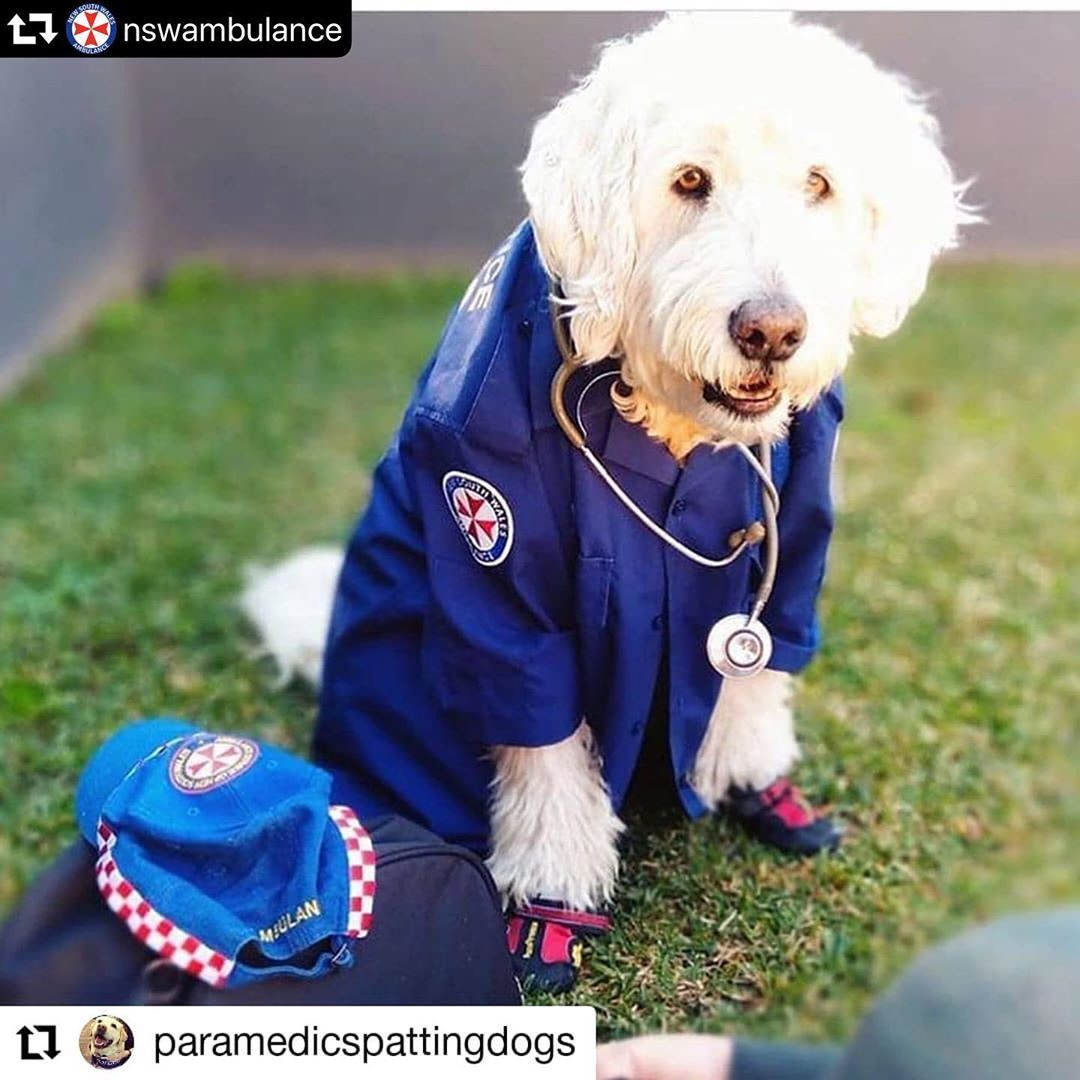 Sometimes The Pawfect Remedy For A Ruff Day Is To Pet A Puppy Repost Paramedicspattingdogs Hello Yo Dogs With Jobs Fluffy Puppies Baby Puppies