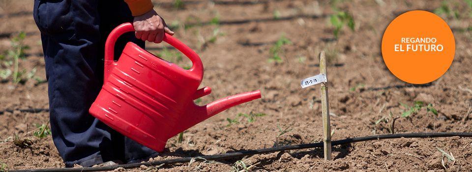 Regando Un Futuro Ecologico Mejor Huerta Agricultor Frutas Y