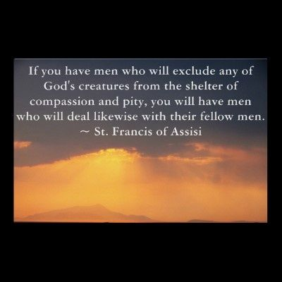 St Francis Of Assisi Quotes St Francis Assisi Quotes Re Animals  Google Search  Vegan For A .