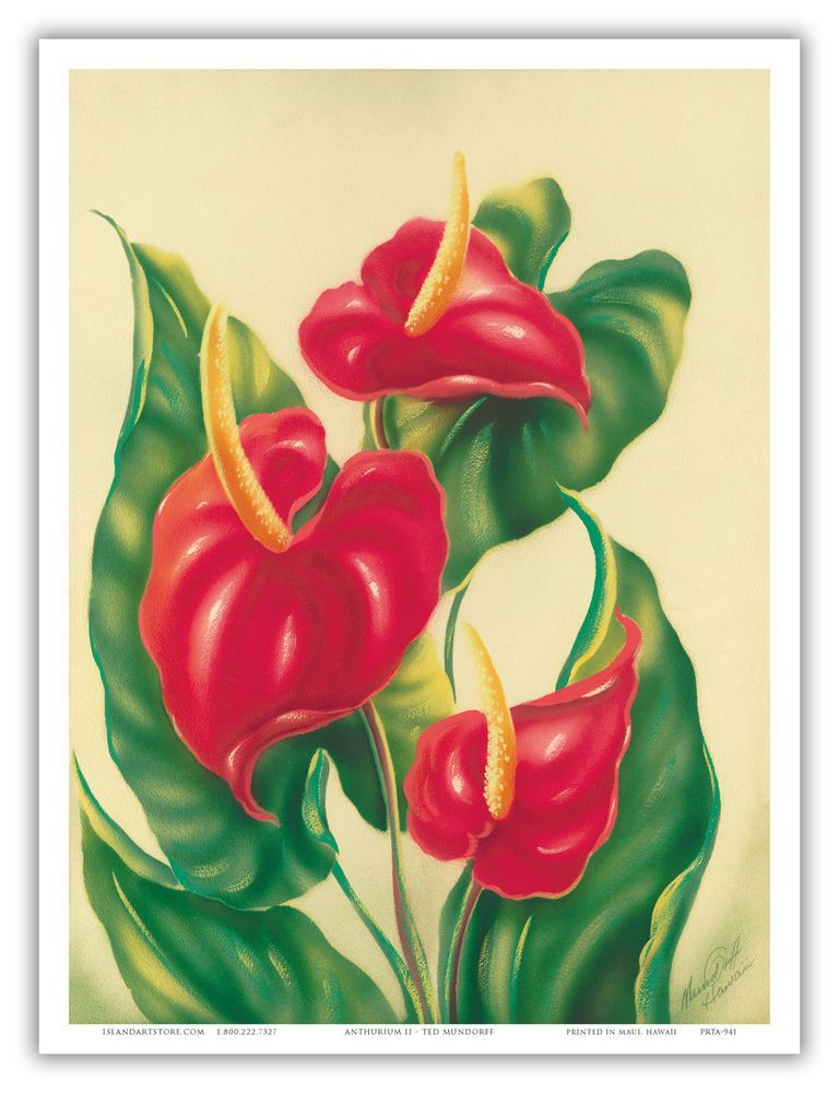 Anthurium Hawaii Flower Floral Botanical Aloha Vintage Art Poster Print Ebay Vintage Poster Art Flower Art Tropical Flowers