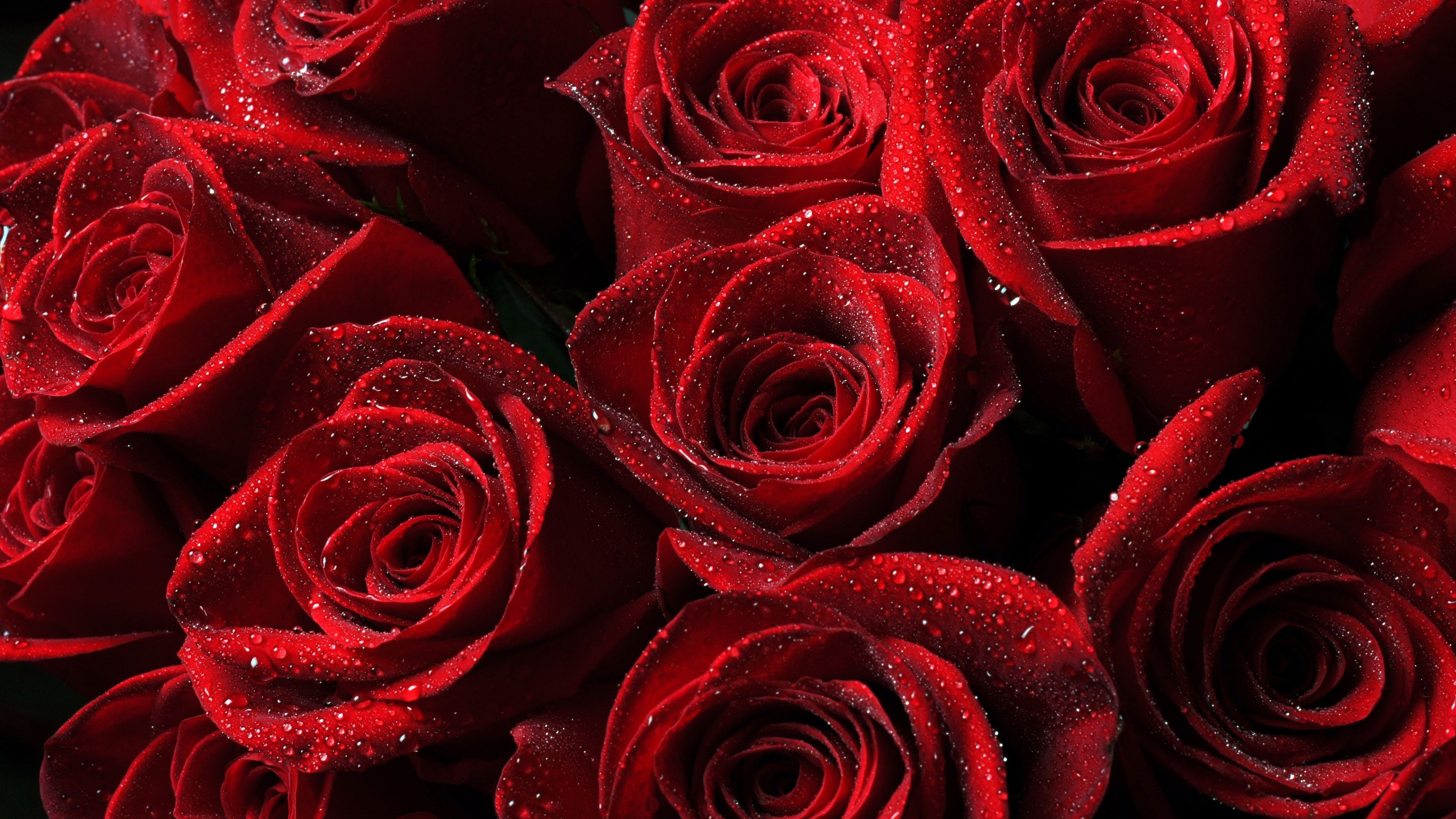 Ultra HD Wallpaper 3840x2160 roses, red, drops, petals 4K