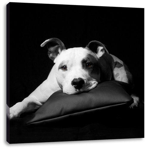 East Urban Home Dark Cute American Staffordshire Terrier On A Cushion Photographic Print On Canvas Canvas Prints Canvas Pictures Canvas