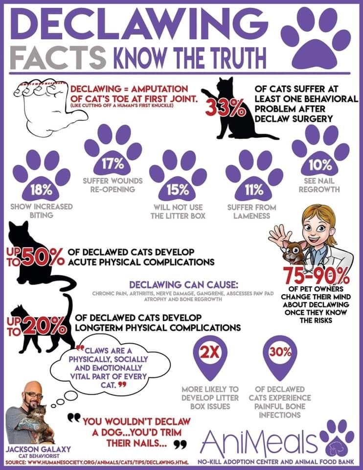 Pin By Mary Thomas On All Things Pets Pet Info Animal Humor Love Animals Declawing Cats Cat Facts Know The Truth