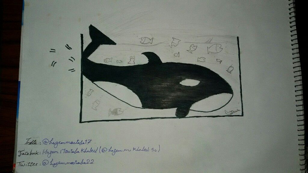 عمرك شوفت حوت في حوض السمك محطوط Db Hazem Mostafa Simple Art Illustration Art