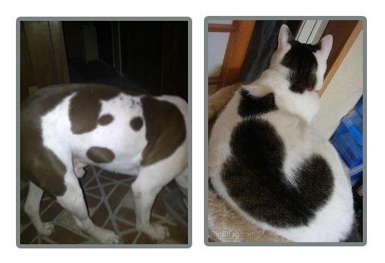 Dog in a dog, Cat in a cat ♥