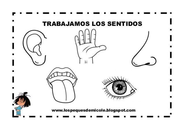 Imagen Relacionada Sentidos El Cuerpo Preescolar Y El