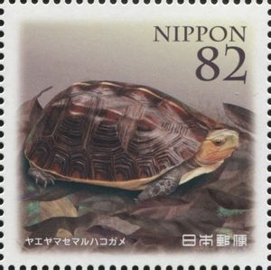 Chinese Box Turtle (Cuora flavomarginata evelynae)