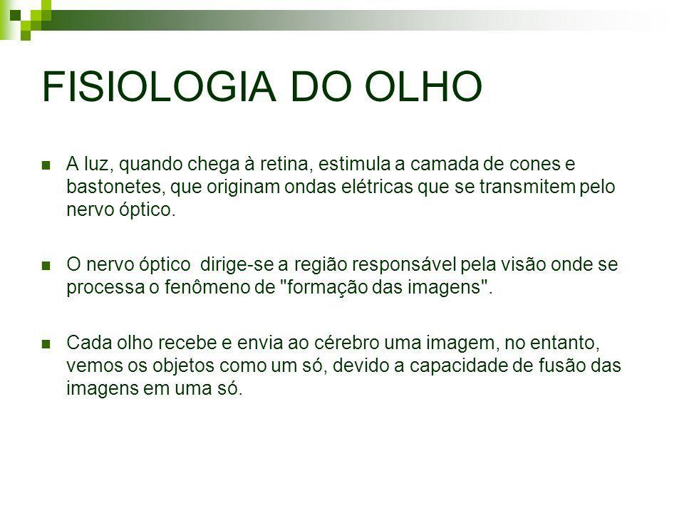 Resultado De Imagem Para Fisiologia Da Visao Fisiologia Nervo