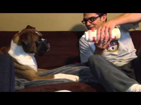 Boxer Dog Fights Water Bottle