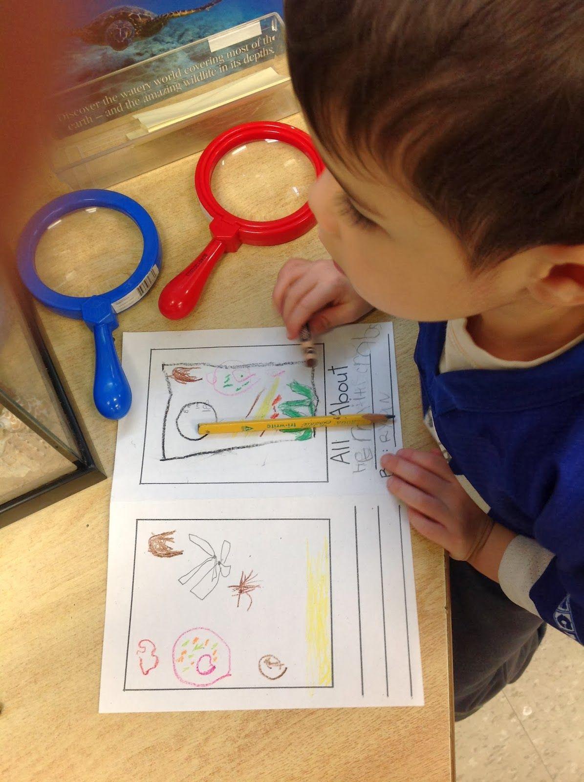 Wonders In Kindergarten Hermit Crabs Inquiry