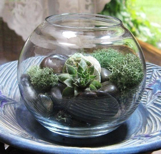 Succulent Garden Terrarium with Succulent Zen Garden Stress