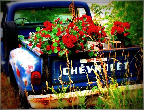 Old trucks>>>though I might be more tempted to restore the truck as opposed to fill it with dirt...still beautiful though!