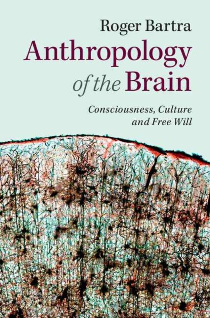 Anthropology Of The Brain Ebook Anthropology Anthropology Books Anthropology Major