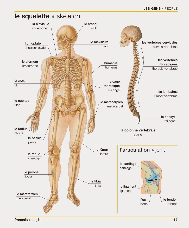 u0026quot le squelette
