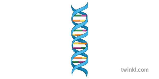 Double Helix Structure Of Dna Diagram Science Secondary Illustration Double Helix Double Helix Piercing Lip Piercing