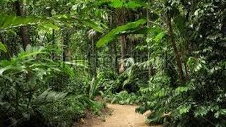 10:26  The spectacular botanic gardens and tropical forest in Cairns,