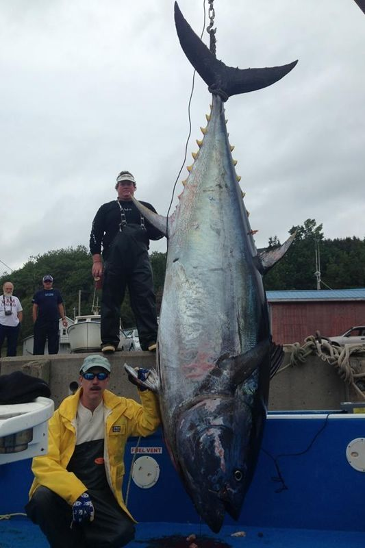 2014 Readers' Top Tuna Photos | Fish, Tuna fishing, Ocean fishing boats