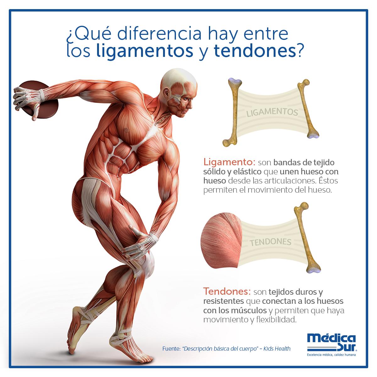 Qué diferencia hay entre los #ligamentos y #tendones? Descubre más ...