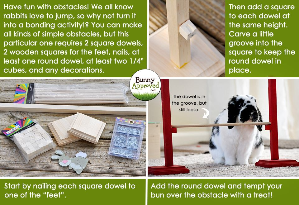 Diy rabbit toy ideas bunny approved house rabbit toys