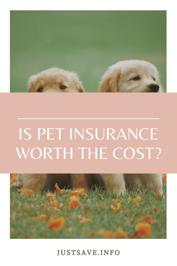 Pin On Pet Wellness
