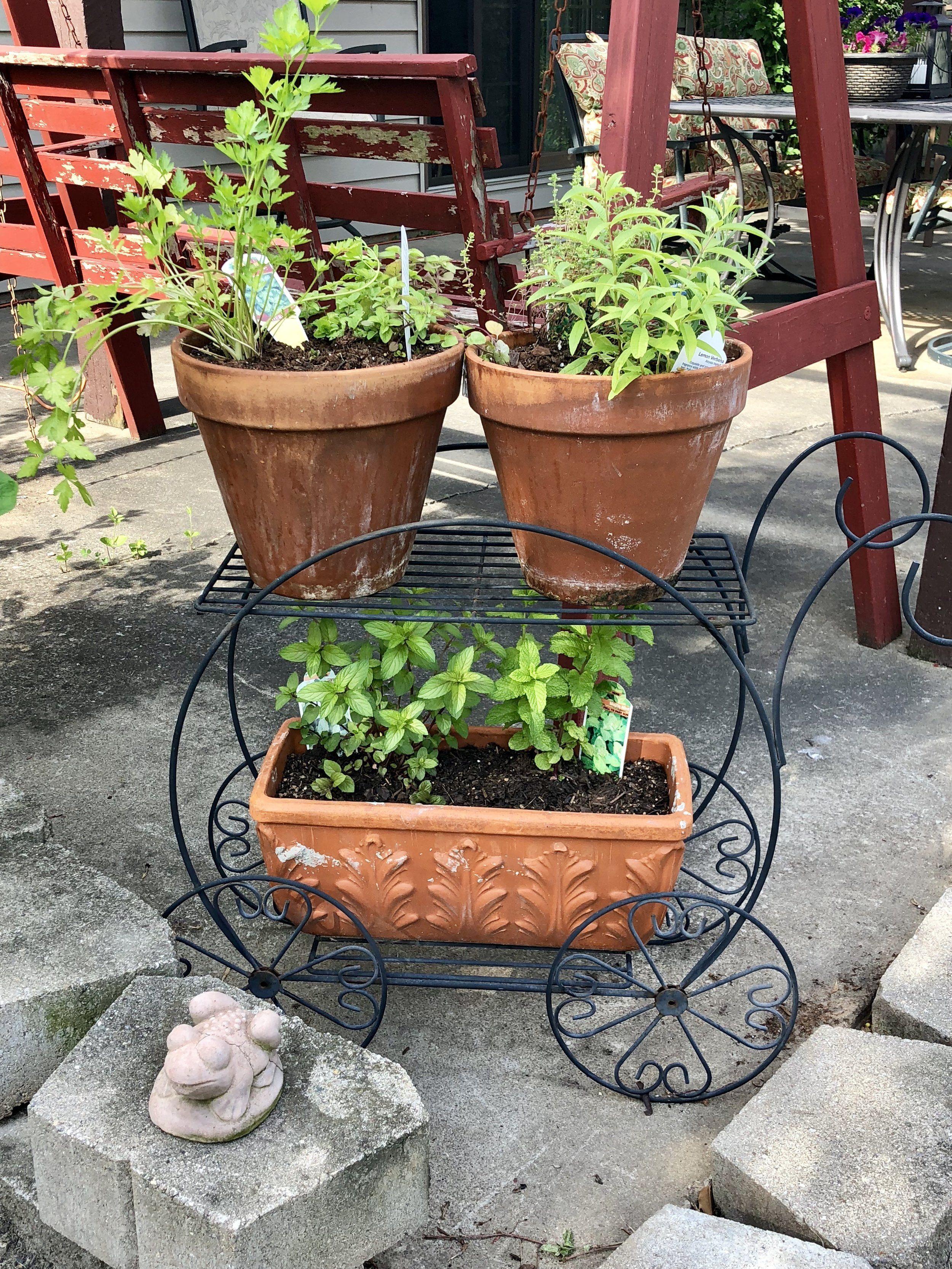10 Patio Herb Garden Ideas Most Brilliant And Attractive Dengan