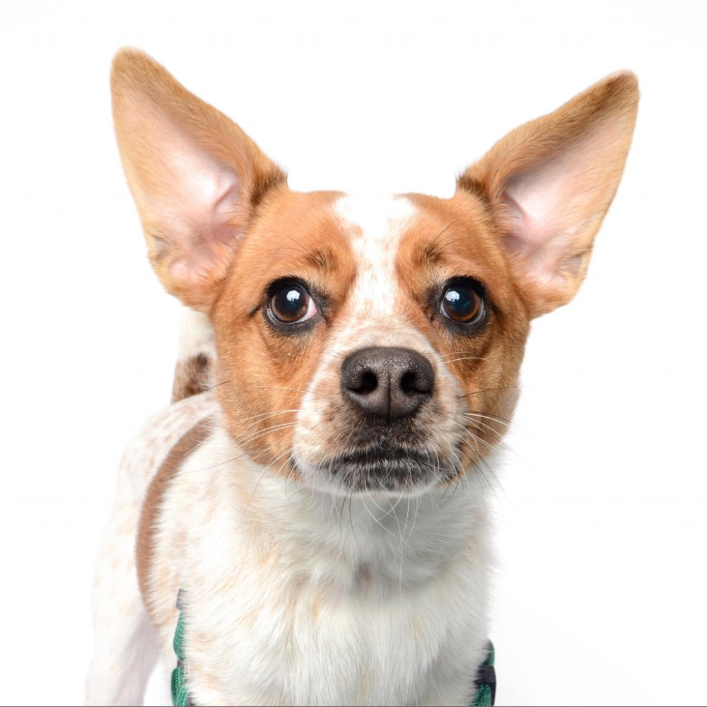 Zoe Humane Society Of Utah In 2020 Humane Society Pet Id