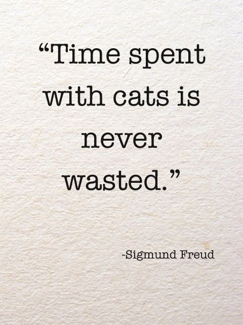 Time Spent With Cats Is Never Wasted Sigmund Freud Luster Of The Month A Cat S World Spectacular Design Interior De Cat Quotes Just Happy Quotes Words