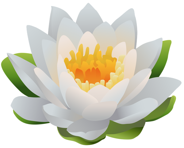 Water Lily PNG Clip Art Image ดอกไม้