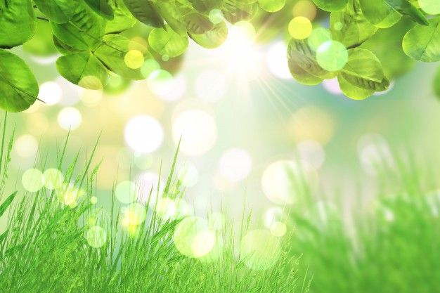 Green Leaves And Grass On A Bokeh Lights Background Free Photo Summer Backgrounds Background Bokeh Background