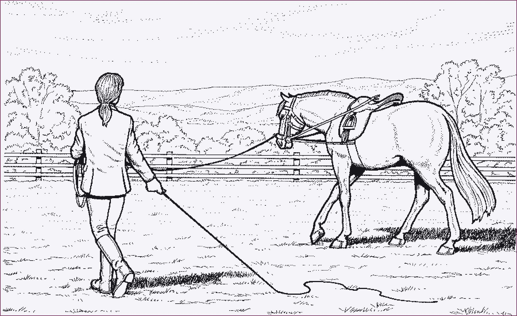 Malvorlagen Malvorlagenkostenlos Horse Coloring Pages Farm Animal Coloring Pages Horse Drawings