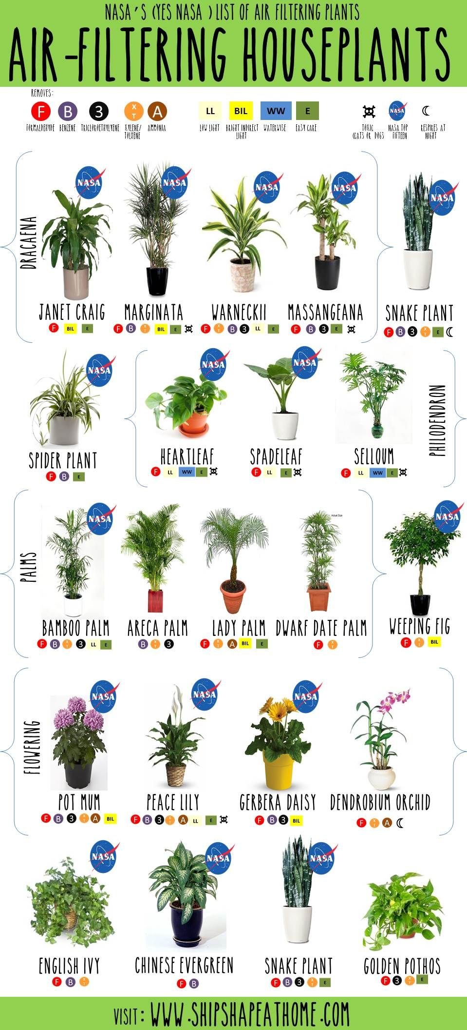 Air Filtering Plants Nasa Garden