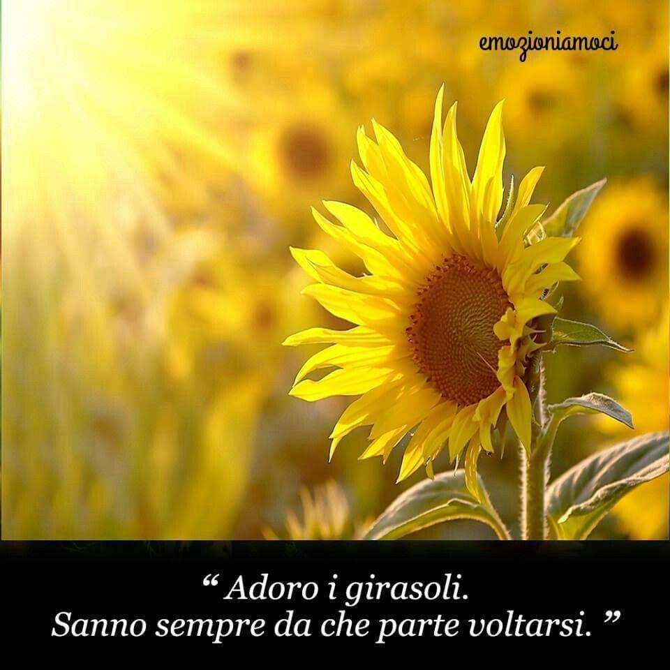 Girasoli Girasoli Immagini Foto