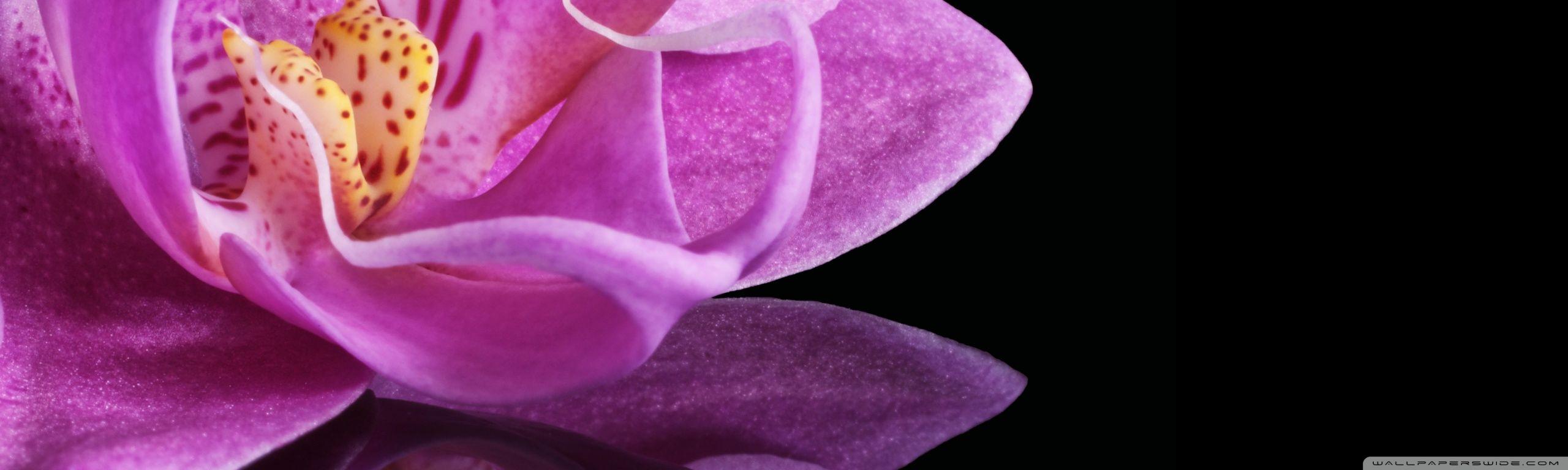 Orchid flower hd desktop wallpaper widescreen high definition d