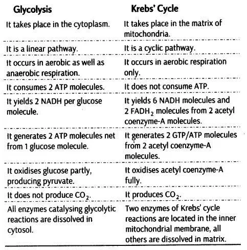 Respiration in Plants - CBSE Notes for Class 11 Biology