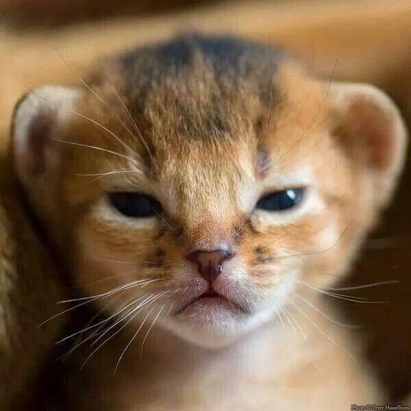 Baby lion! Sooo cute!