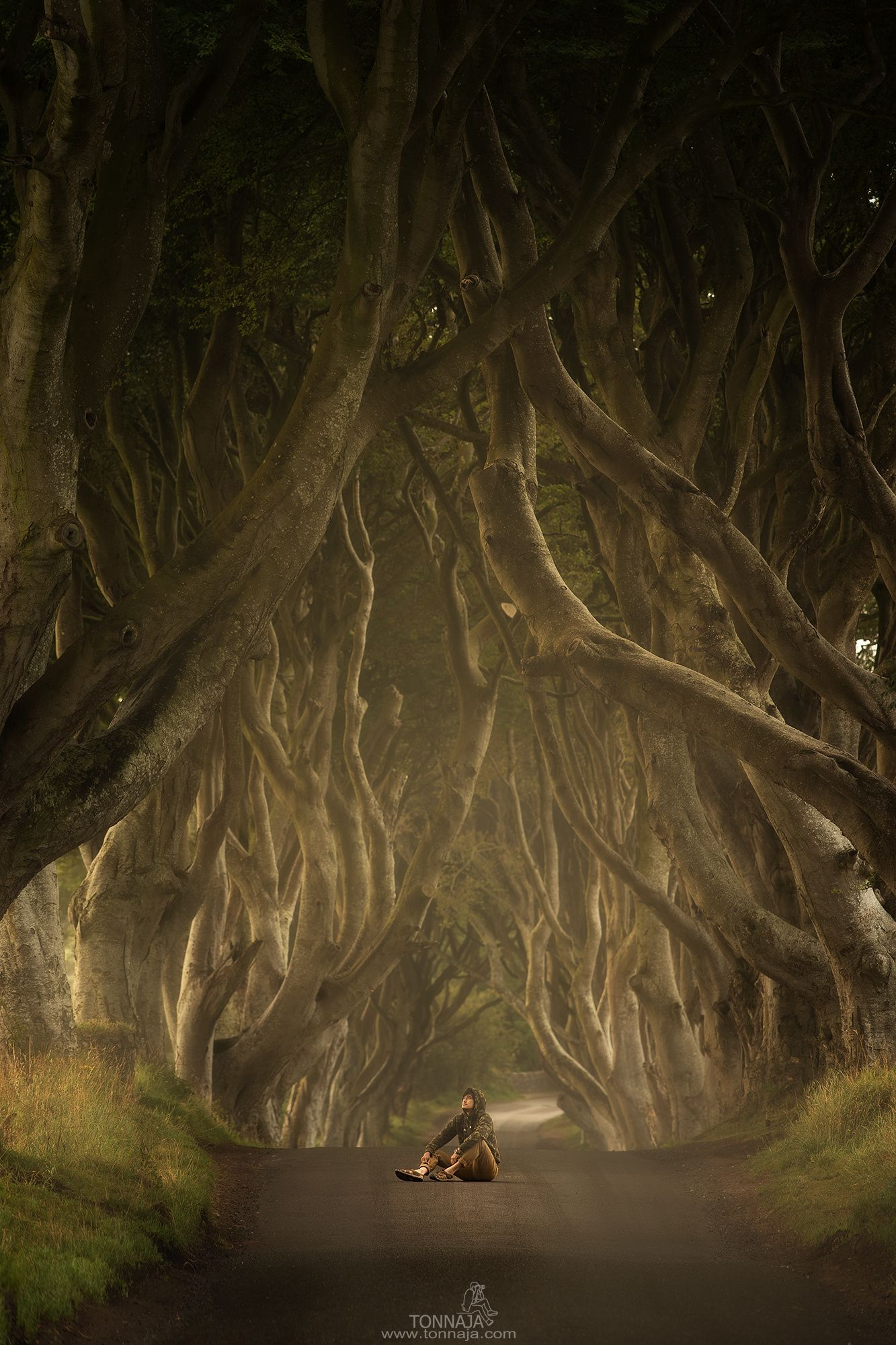 Unter the dark hedges by Tonnaja Anan Charoenkal on 500px
