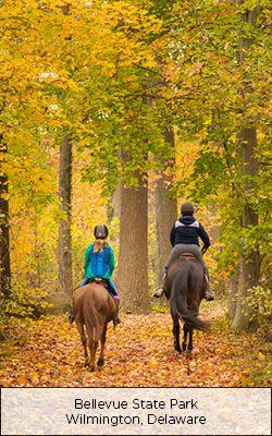 Horseback Riding At Bellevue State Park Wilmington Delaware