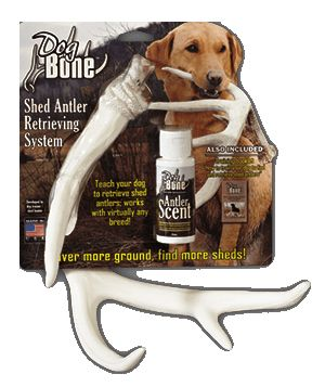 Training Help For You And Your Dog Antler Sheds Dog Antlers