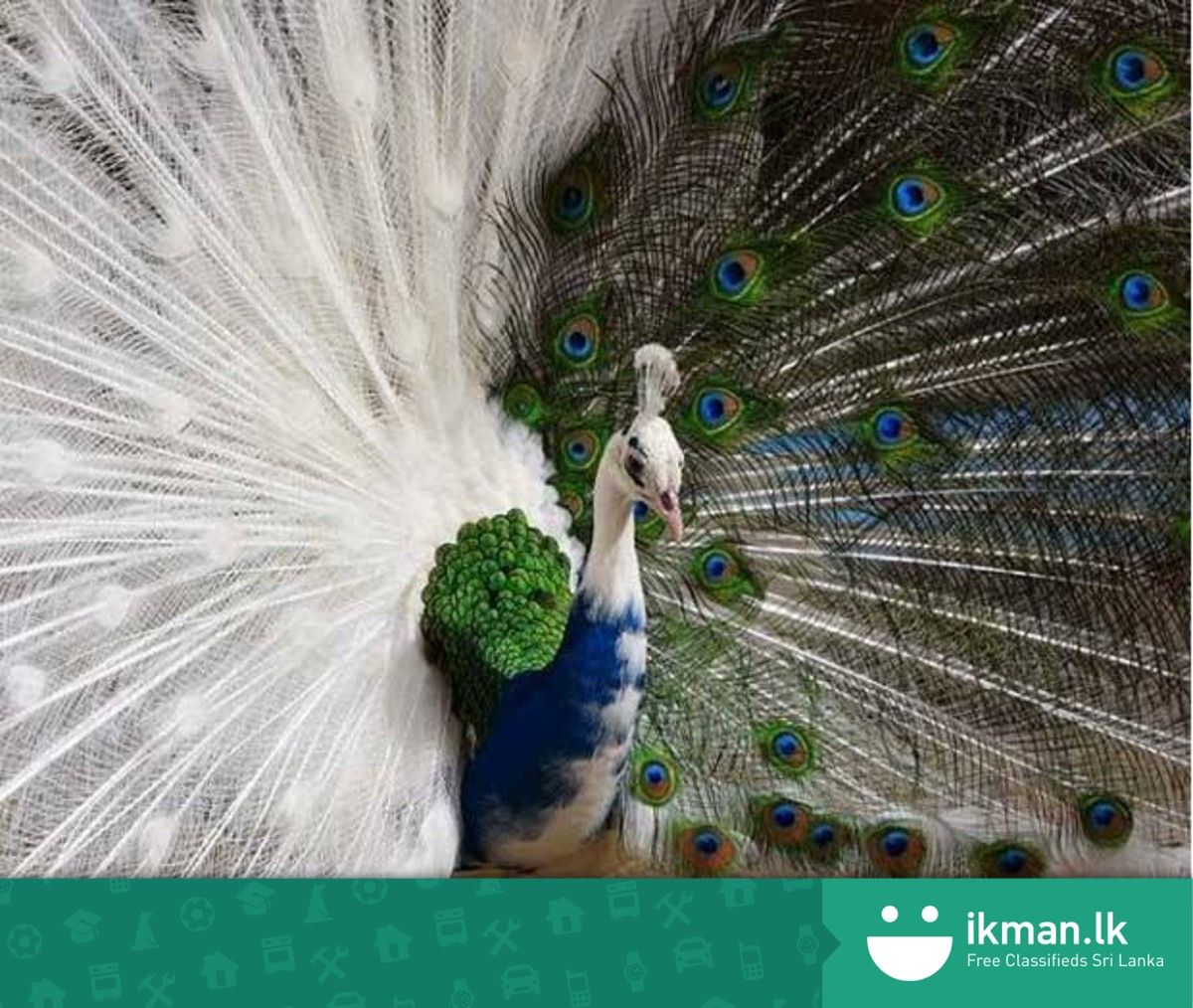 Ikman lk land for sale - Want To Have A Bird As A Pet Read This Guide Http