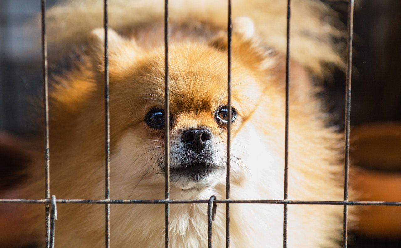 How To Stop Puppy Crying In Crate At Night Training your