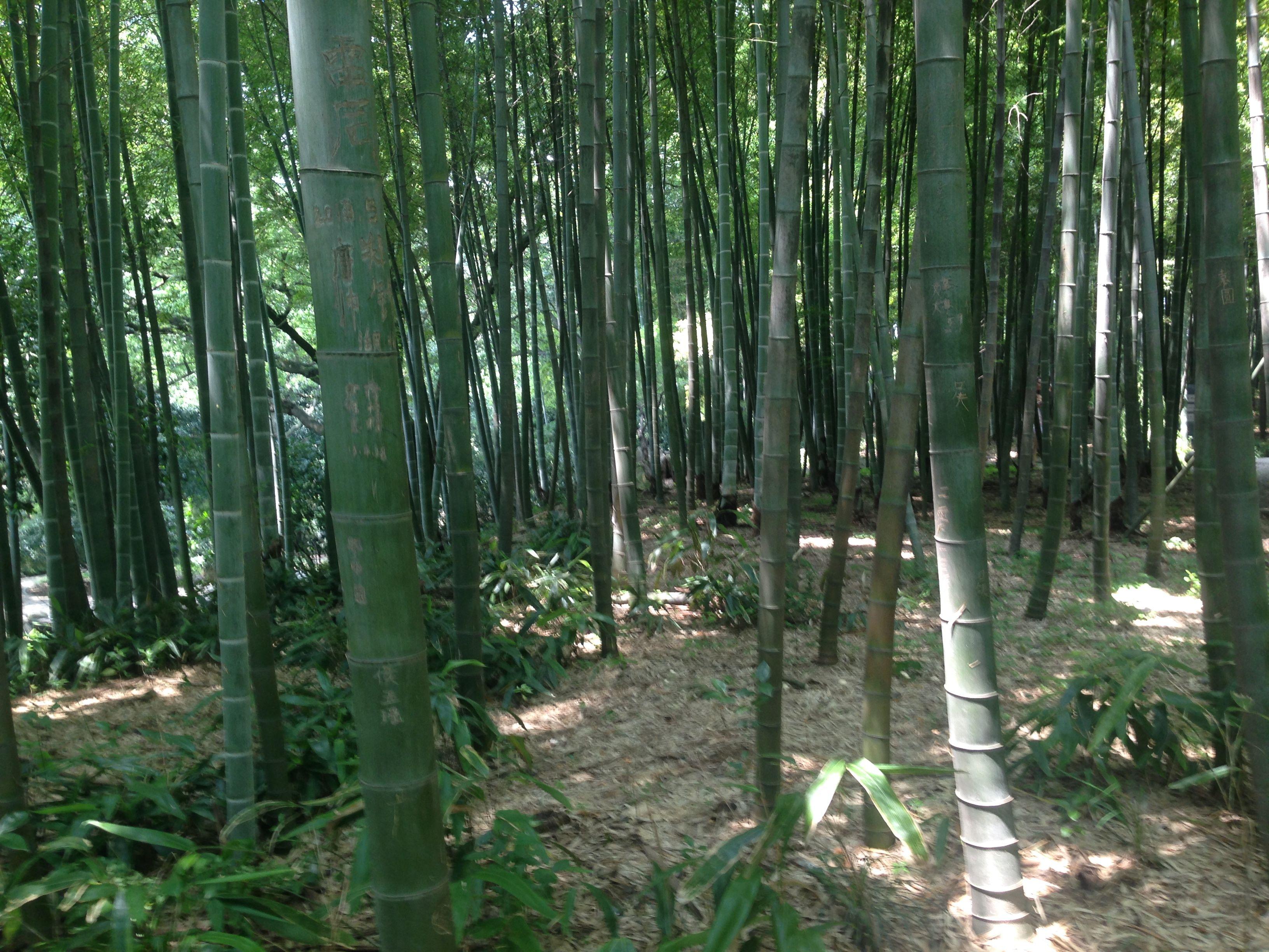 Der Bambuswald Im Tiger Hill Tiger Hill Pinterest Tigers