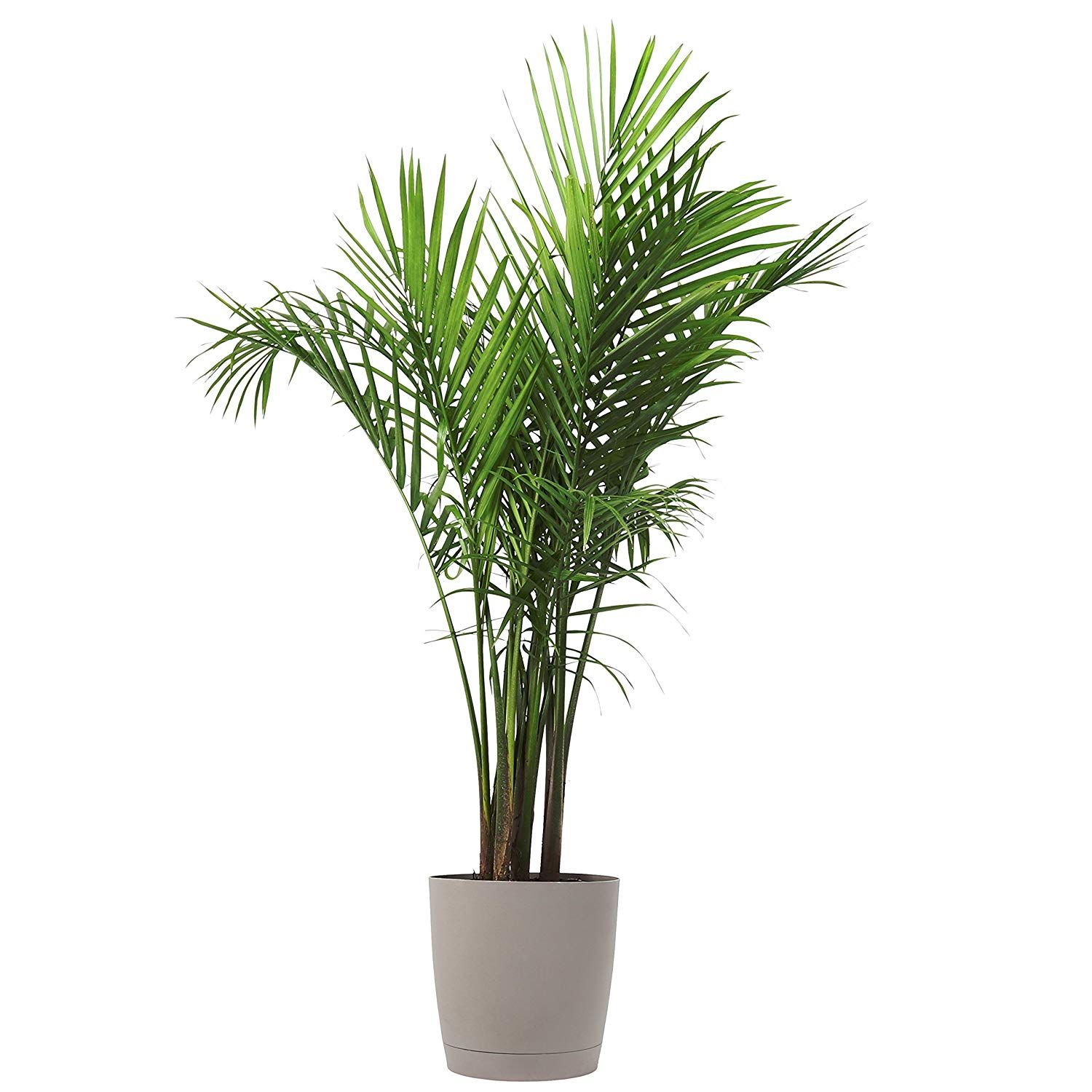 10 Great Budget Sources For Buying Plants Online Indoor Palm