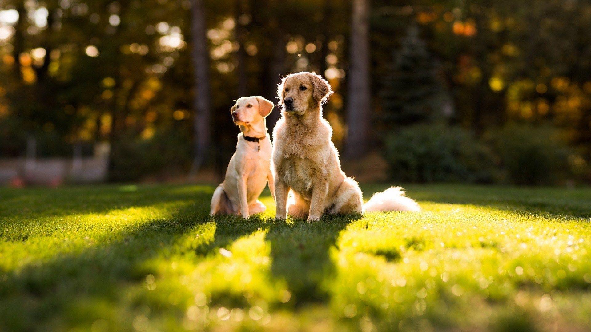 Cute Dog Wallpapers Desktop Mobile 65 Dog Wallpaper Cute Dog Wallpaper Dog Friends