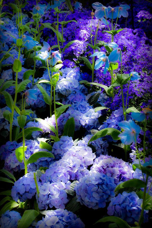Rhapsody in Blue: Happy Easter! by Steven Madden on 500px