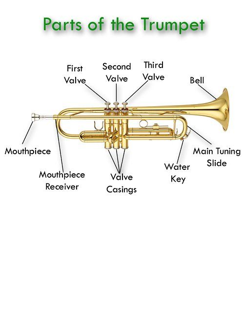 Brass Instruments Teaching Music Instrument Families Learn Music